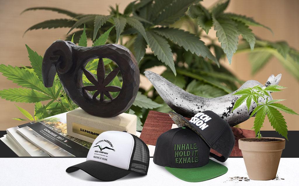 Dutch-passion-best-seedbankcannabis-seeds-worldwide