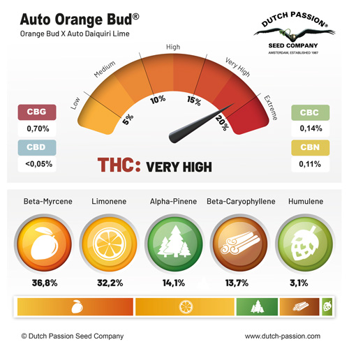 Auto Orange Bud terpenes