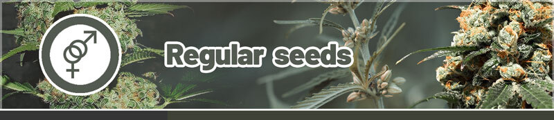 Buy regular cannabis seeds