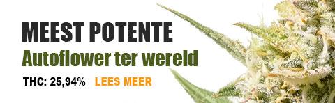 most-potent-voor-op-productpagina-image-NL.jpg