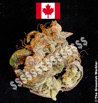 Canada: Legalise cannabis like the USA did