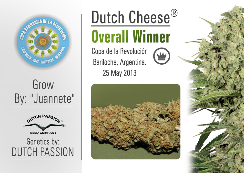 Cannabis Cup Success for Dutch Passion