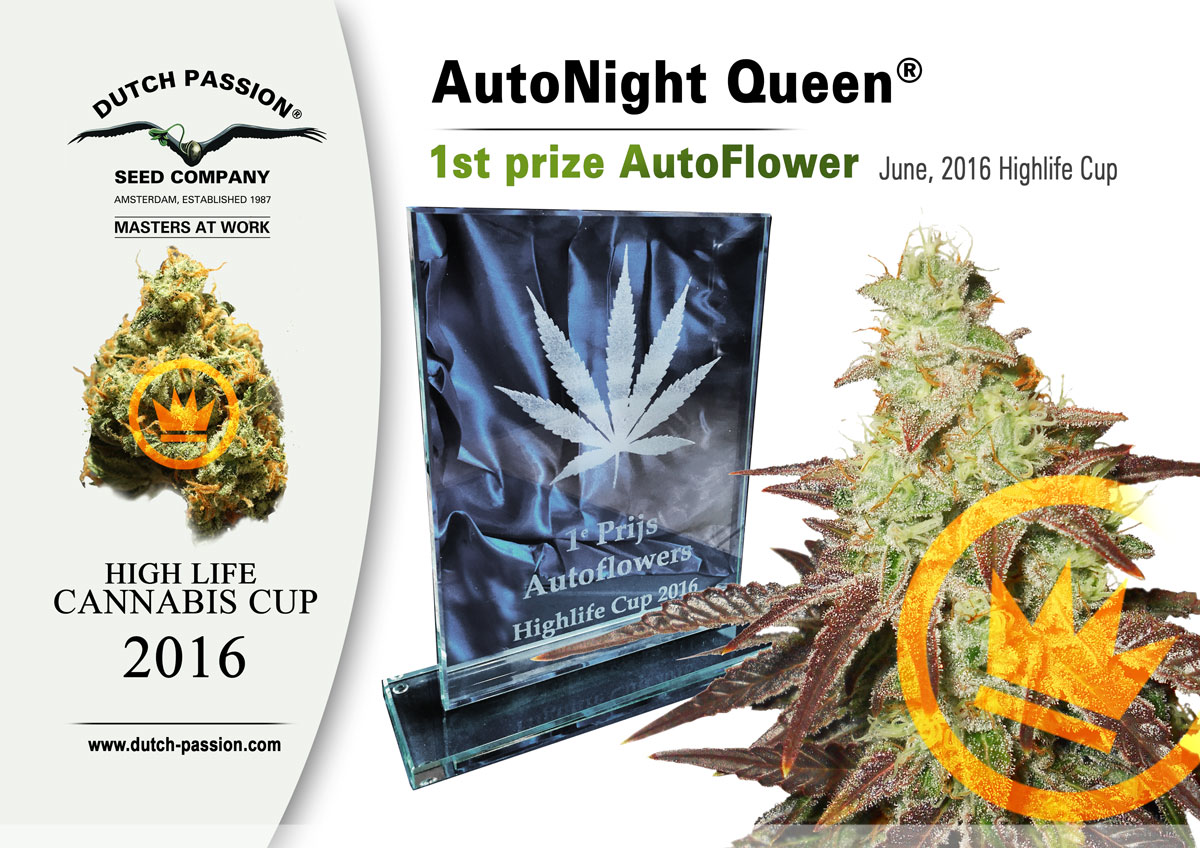 AutoNight Queen wins First Prize at 2016 Highlife Cup