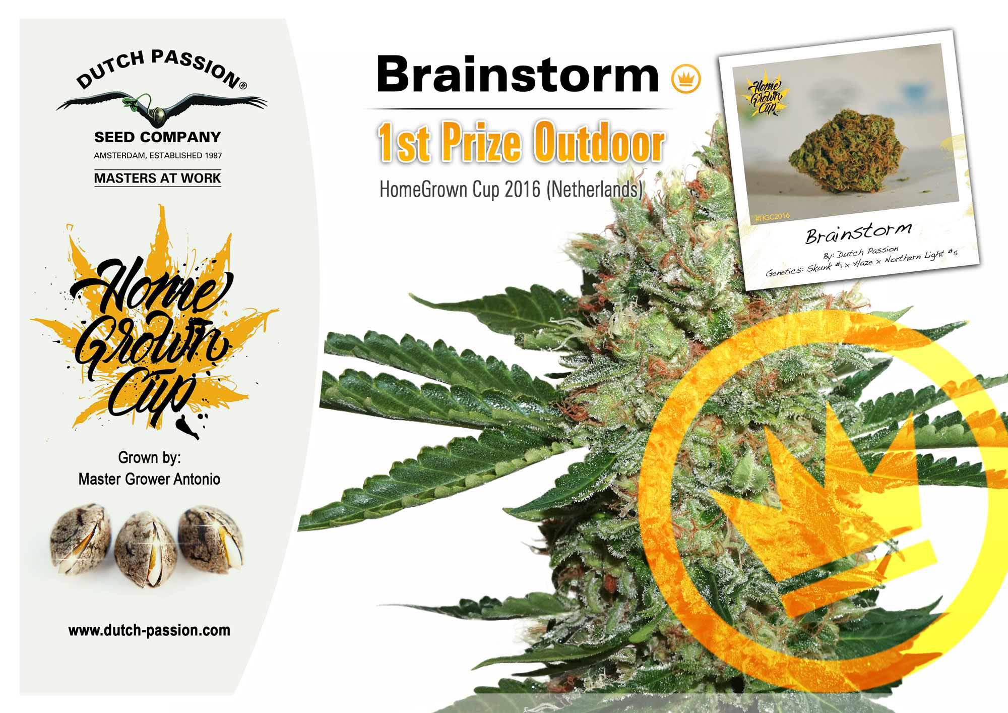 Dutch Passion Brainstorm wins First Prize at Home Grown Cup