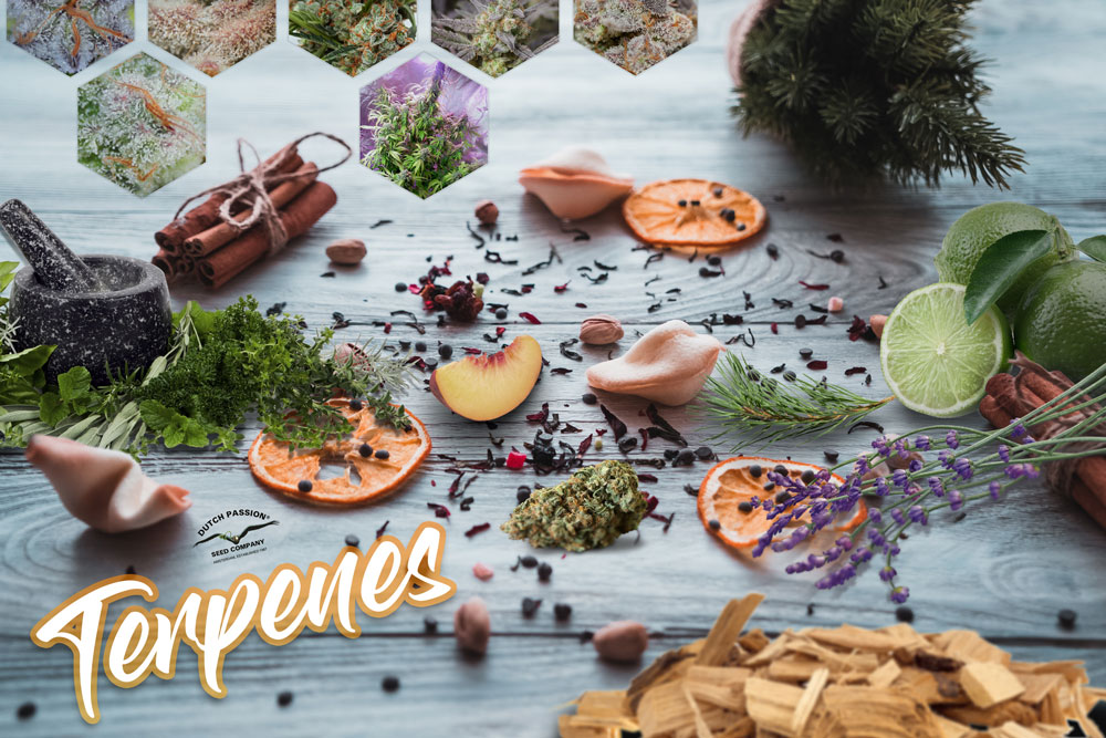 Everything you need to know about terpenes