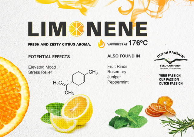 What Is Limonene and what does this cannabis terpene do?