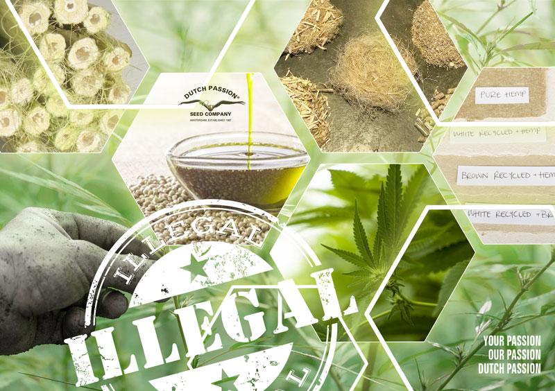 Warum Ist Cannabis Illegal