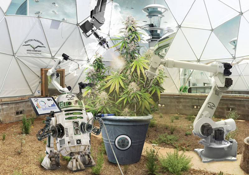 A look into the future of cannabis. What will cannabis be like in the future?