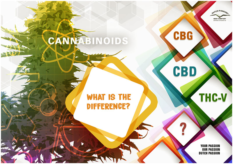 What is the difference between CBD, CBG and THCV?