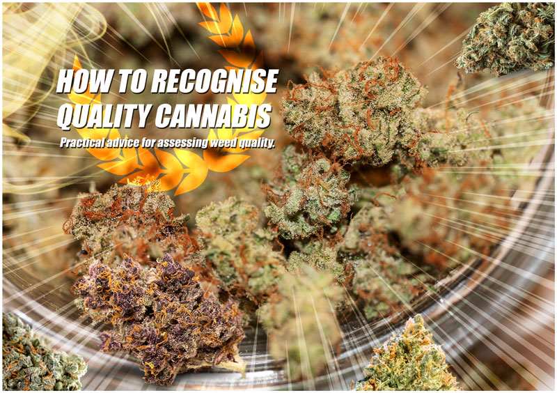 How to recognise quality cannabis. Practical advice for assessing weed quality.