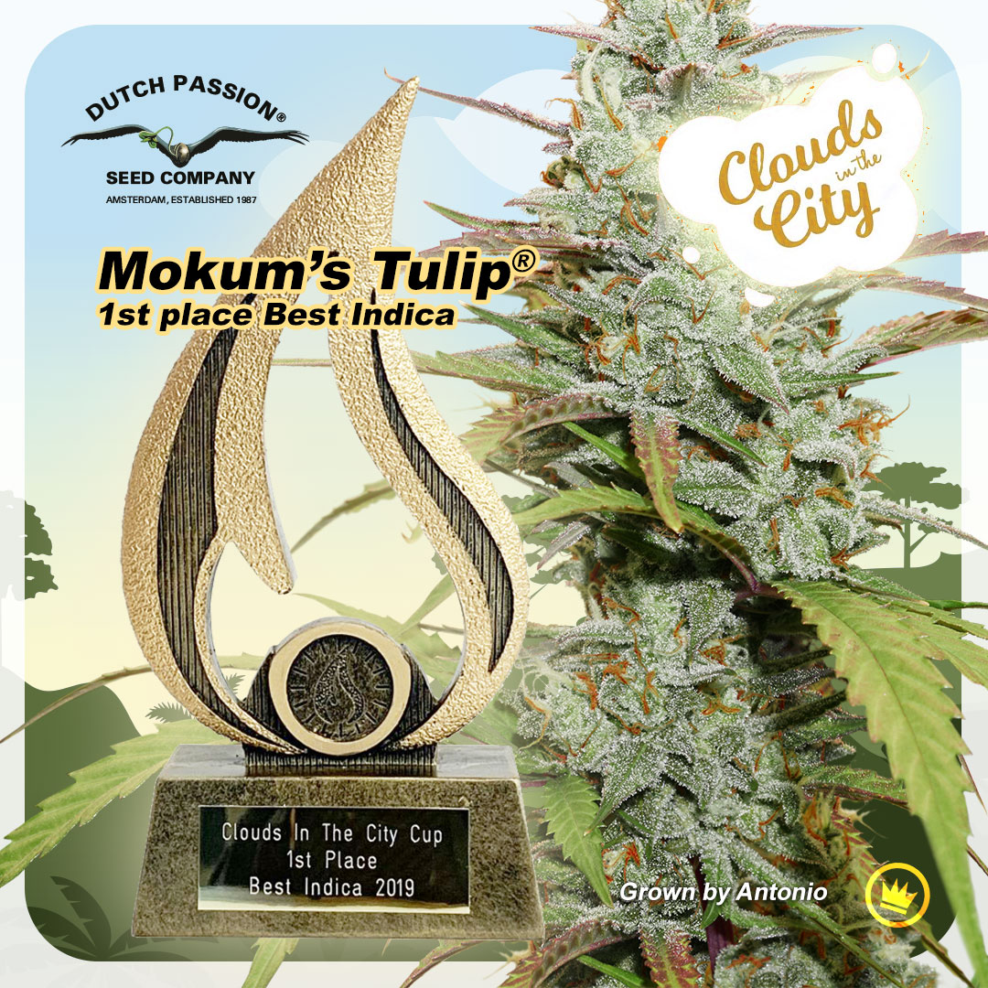 Dutch Passion Cannabis Cup win with Mokum's Tulip