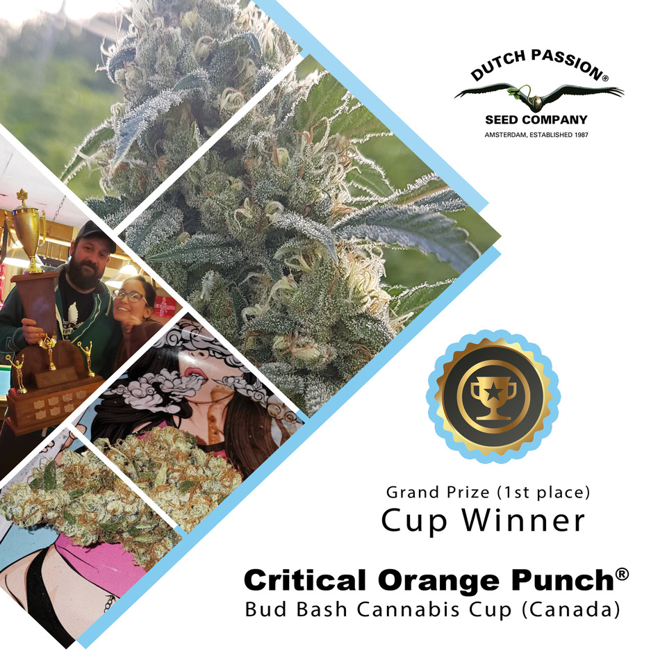 Dutch Passion Critical Orange Punch takes 1st Prize at the Canadian 420 Cannabis Cup