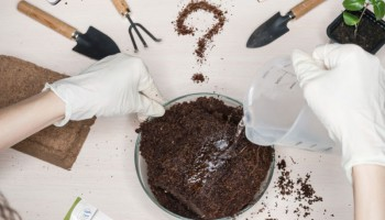 How to choose the best soil for cannabis