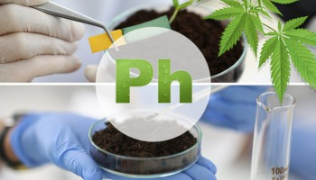 Comprendre comment le pH affecte la plante de cannabis