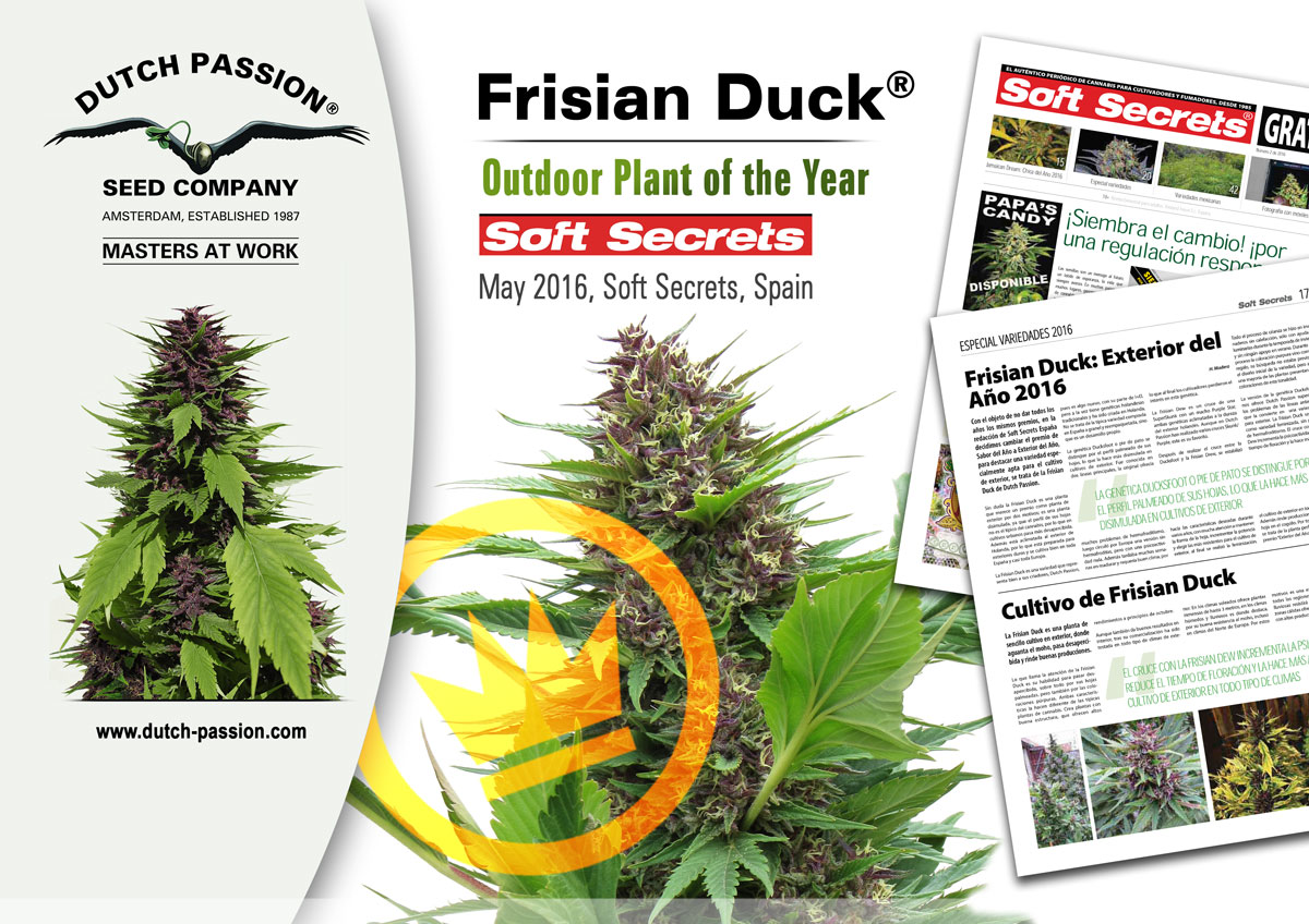 Frisian Duck - Plant Of The Year 2016 award from Soft Secrets Spain