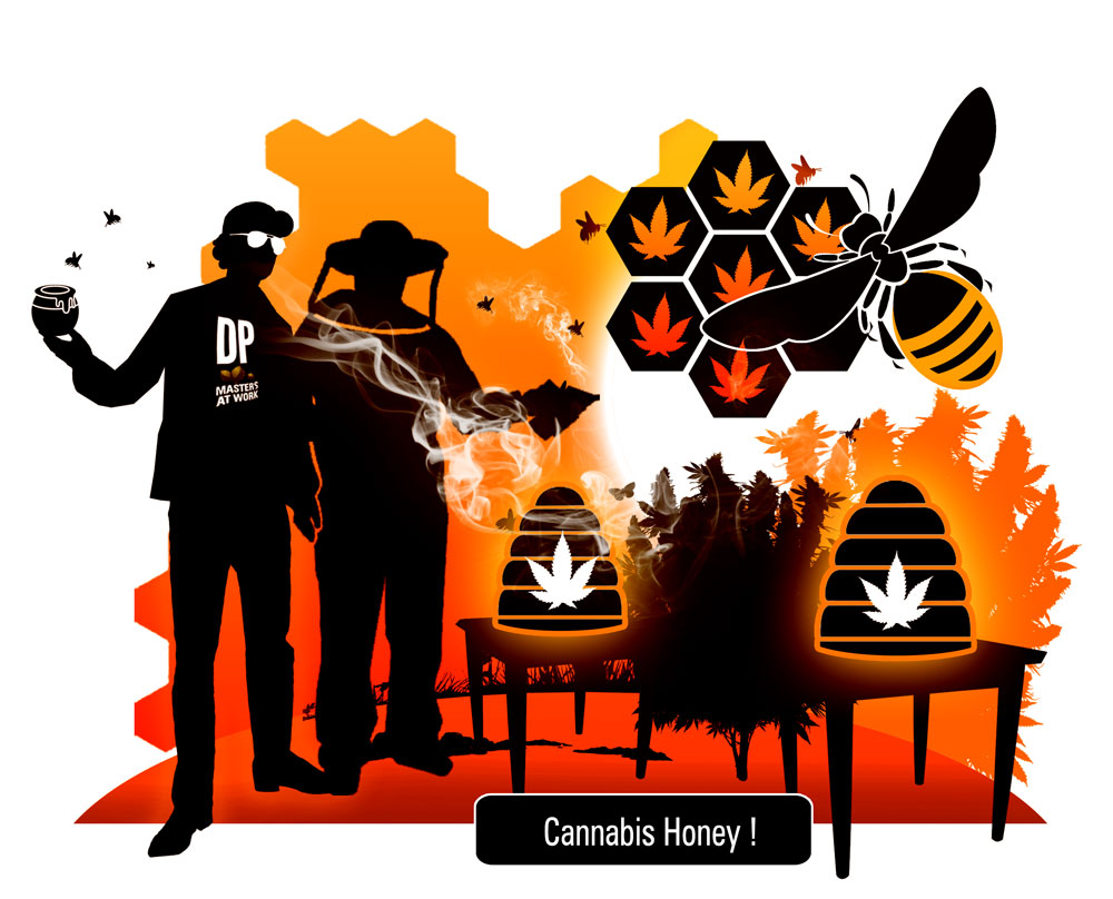 The bees that make cannabis honey