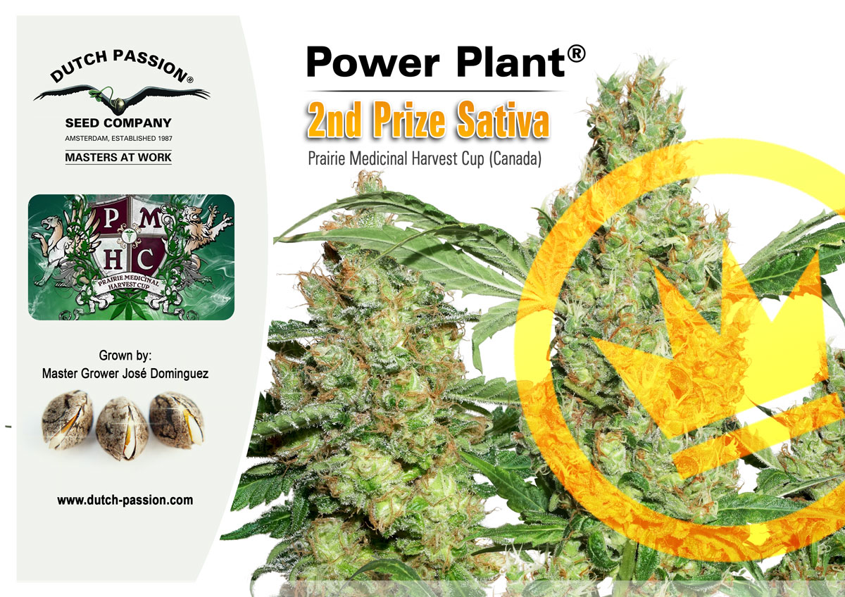 Cannabis Cup For Dutch Passion Power Plant in Canada