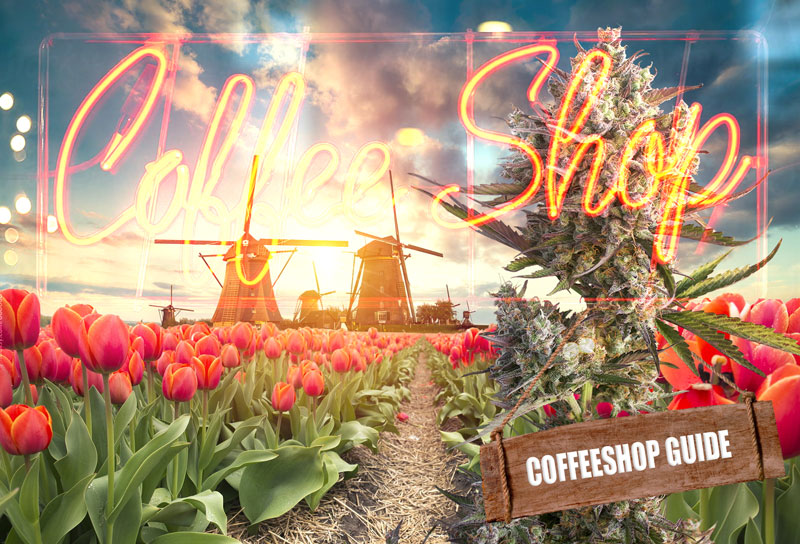 A guide to buying cannabis in The Netherlands.