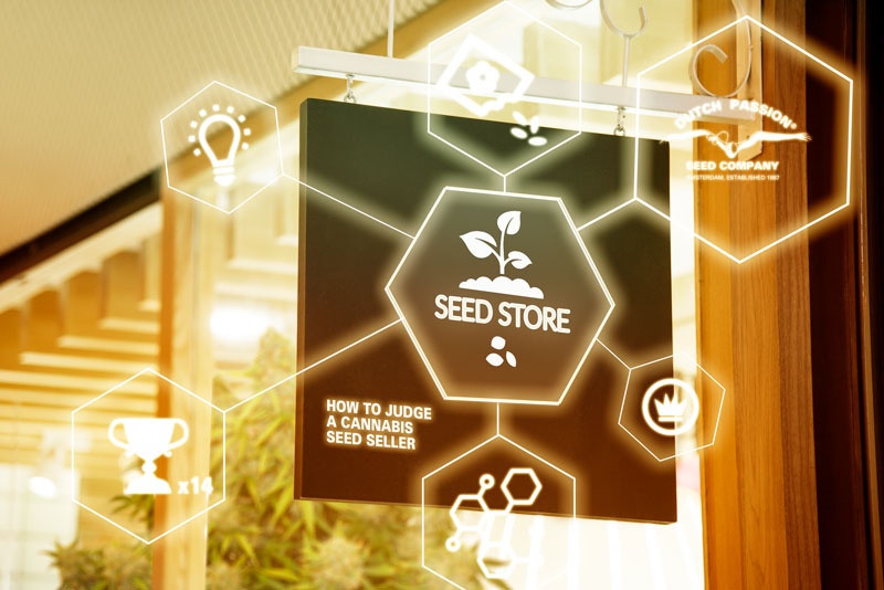 How to judge a cannabis seed seller