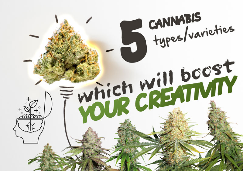 5 cannabis varieties that will boost your creativity