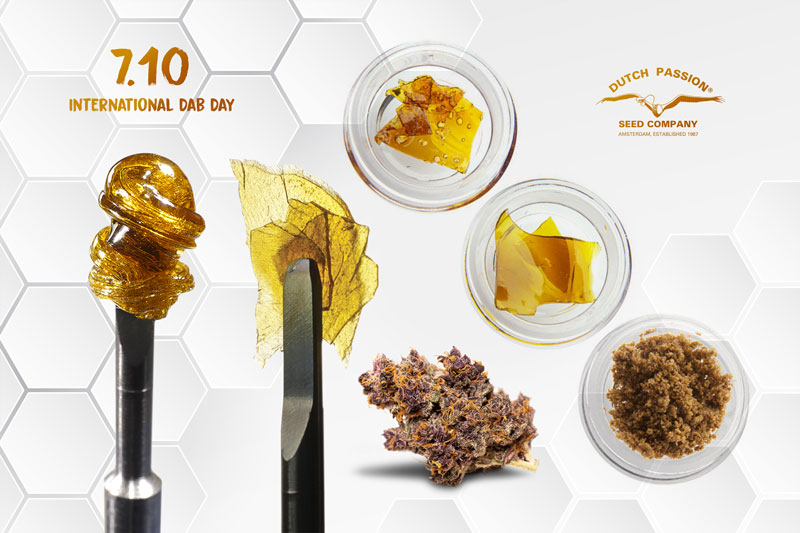 7/10 International Dab Day. Celebrating cannabis oil and cannabis concentrates.