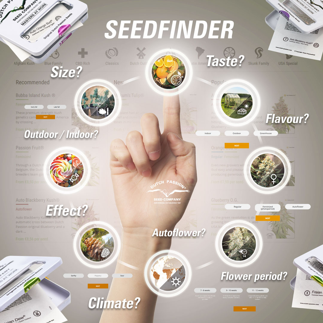 Dutch Passion Seedfinder