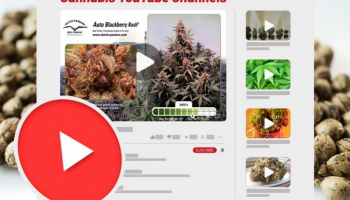 The best YouTube channels every weed lover needs to watch