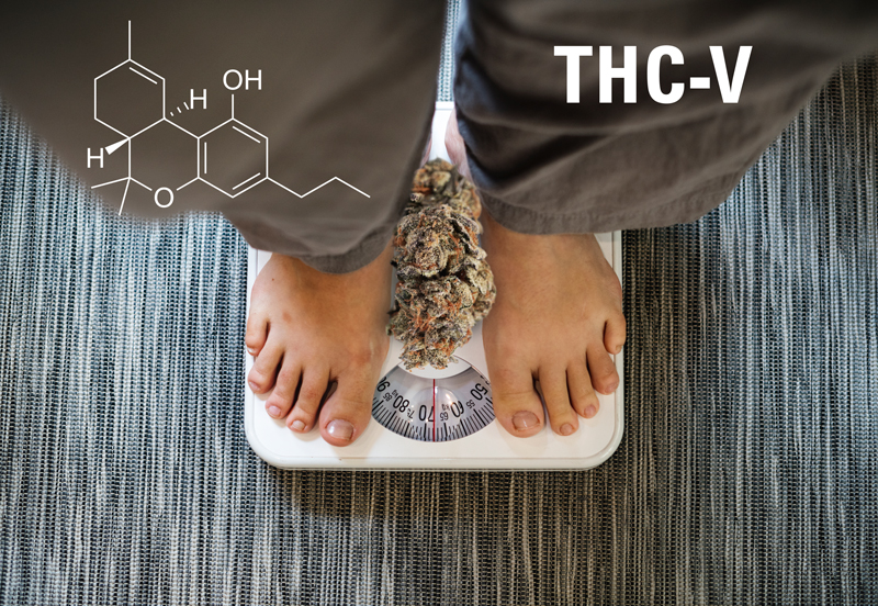 THCV, Tetrahydrocannabivarin. What is it and what are the benefits of THCV?
