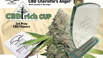 Success for Dutch Passion at the CBD Rich Cannabis Cup