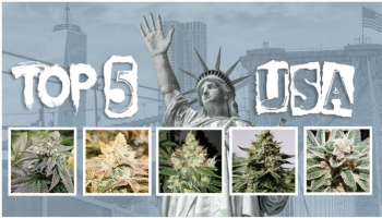La nostra top 5 dei semi di cannabis USA