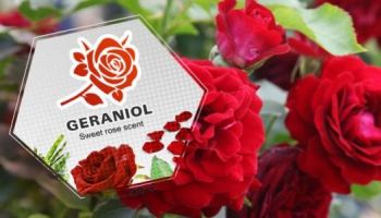 What is geraniol? Uses and effects of this terpene found in cannabis