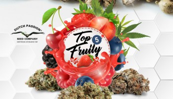Top 5 cannabis seeds with fruity flavour