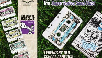 Super Sativa Seed Club x Dutch Passion: La colaboración legendaria continua