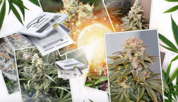 Key facts you should know about photoperiod cannabis