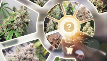 How to find the best cannabis strains for you