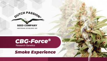 CBG and CBG seeds: What does cannabigerol feel like?