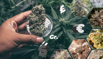 Weed Measurements: weights chart, prices and tips