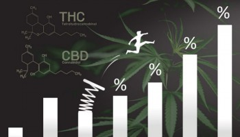 Why more THC does not always get you higher