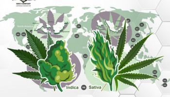 Indica vs Sativa: Origins, Uses and Effects