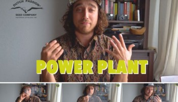 Coffee shop vs homegrown weed quality: Power Plant case study (part 1)